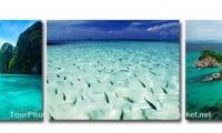 เกาะพีพี เกาะไข่ -  อ่าวพังงา TPK : 3208