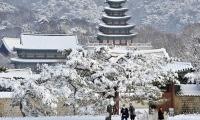 FIRST SNOW KOREA
