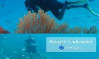 package tour diving similan