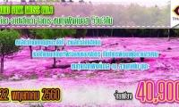 Hokkaido Pink Moss no.1