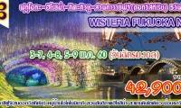 Wisteria Fukuoka no.2