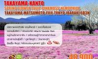 Takayama - Kanto Spring Flower Tulip - Pinkmoss - Nemophila Takayama