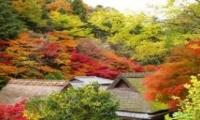 DarakornTravelทัวร์ญี่ปุ่น HILIGHT JAPAN B PLUS USJ 7 วัน 5 คืน (TG)