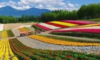 ทัวร์ญี่ปุ่น Hokkaido Enjoy