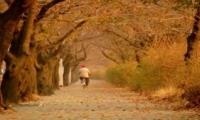 ทัวร์เกาหลี Sky Bike in Fall Season 5 วัน 3 คืน (KE)