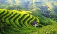 ทัวร์จีน คุนหมิง ดอกซากุระ นาขั้นบันไดหยวนหยาง ทุ่งดอกมัสตาร์ด 5 วัน 4