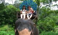 โปรแกรม 1 ขี่ช้าง+วัดถ้ำเสือ
